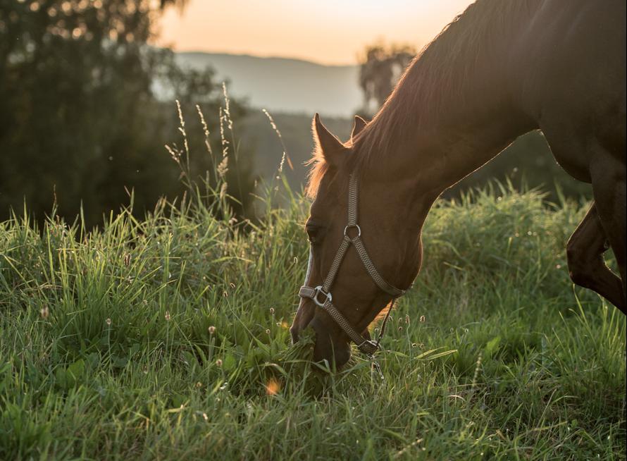 vert-horse-grazing-sun-EP-cover-e1424051930854
