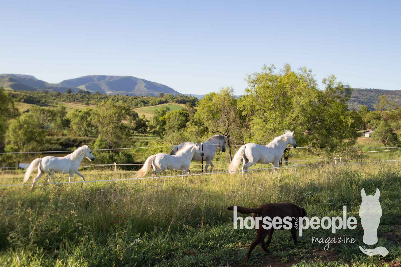 Horses in laneway